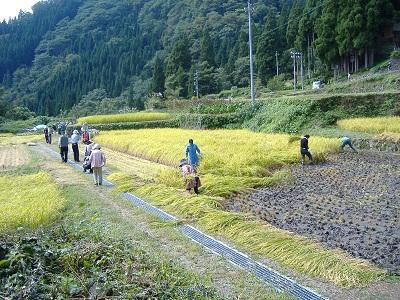 riceharvest400